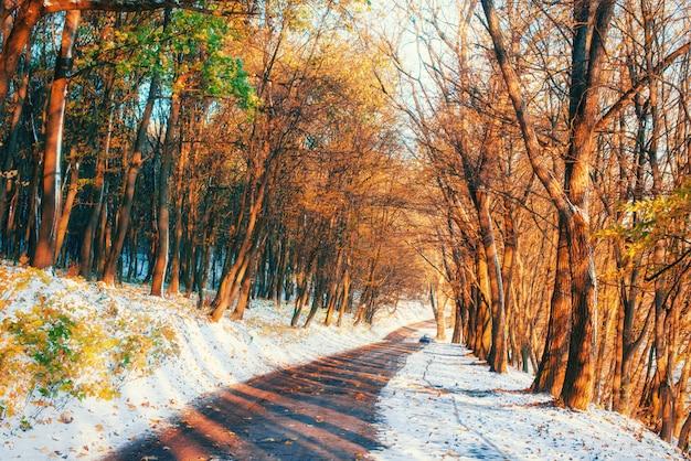 Erster schnee im wald. schönheitswelt.