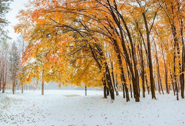 Erster schnee im wald.