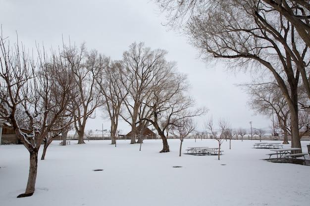 Erster schnee nevada usa im park