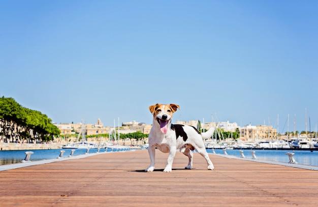 Erwachsener hund steht auf dem hölzernen ponton