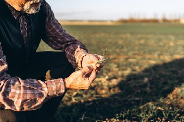 Erwachsener landwirt, der anlagen auf seinem bauernhof überprüft.
