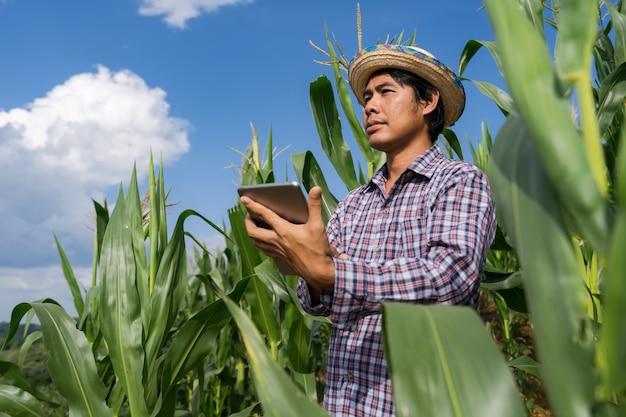 Erwachsener landwirt, der tablette auf dem maisgebiet unter blauem himmel im sommer hält