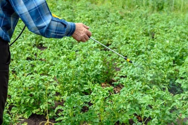 Erwachsener mann behandelt pestizide von jungen grünen kartoffelbüschen des colorado-käfers