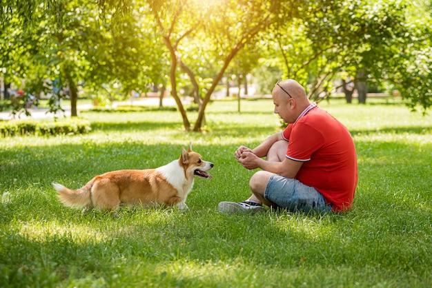 Erwachsener mann trainiert ihren walisischen corgi-pembroke-hund im stadtpark