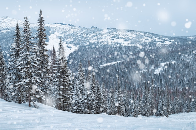 Es schneit im wald. skigebiet sheregesh, schöne aussicht.