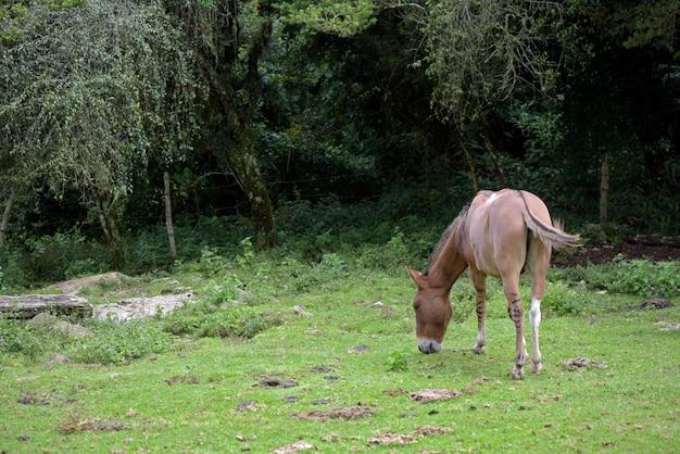Esel, der auf grünem gras weidet