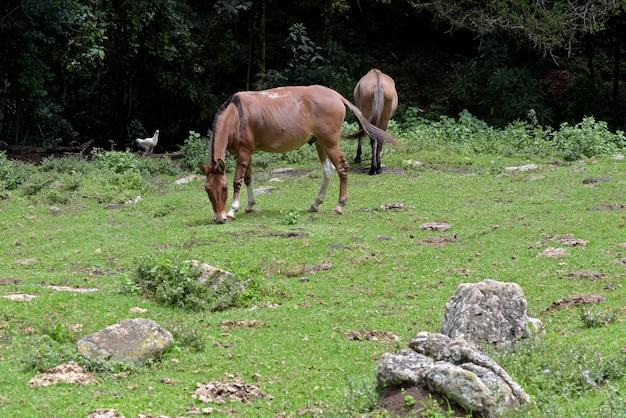Esel, die auf grünem gras grasen