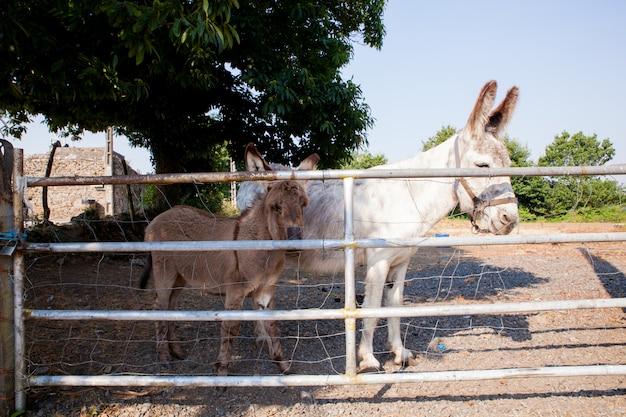 Esel im stall Premium Fotos