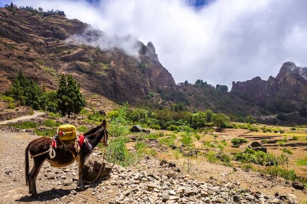Esel im votano-krater cova de paul auf der insel santo antao, kap verde
