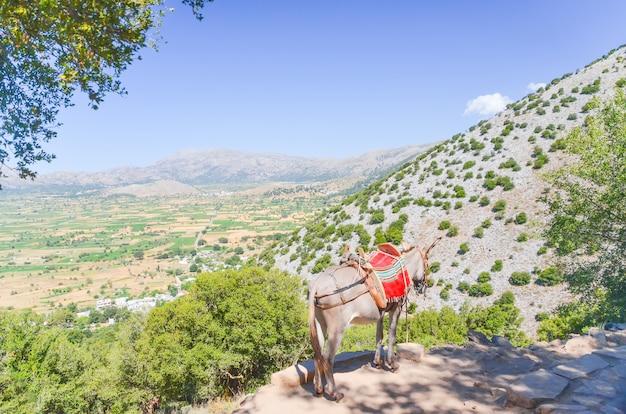 Esel vor dem hintergrund der schönen lassithi-hochebene