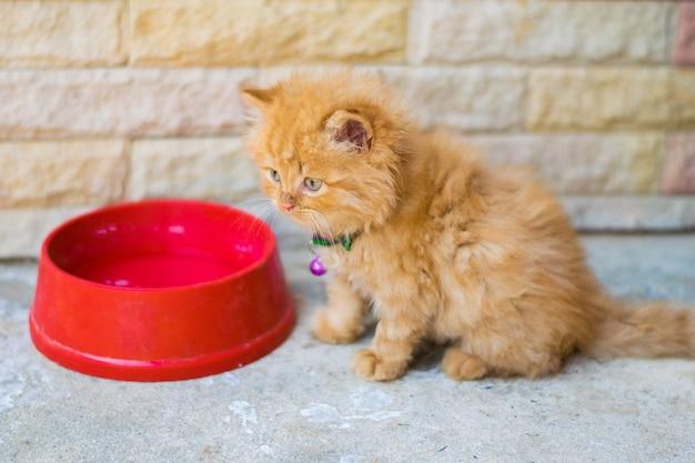 Essen katze und perserkatze