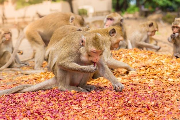 Essende affen, tempel in thailand.