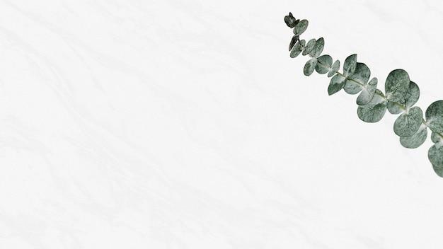 Eukalyptus-silberdollar-banner aus weißem marmor