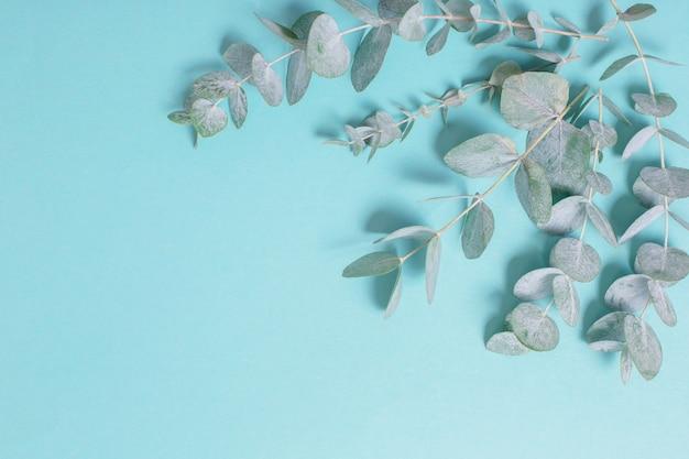Eukalyptusblätter auf papierhintergrund