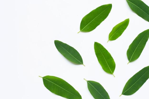 Eukalyptusblätter auf weißer wand. speicherplatz kopieren