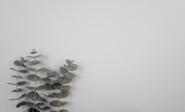 Eukalyptusblätter stiele flach legen zusammensetzung auf weichem neutralem pastellgrünem hintergrund mit raum