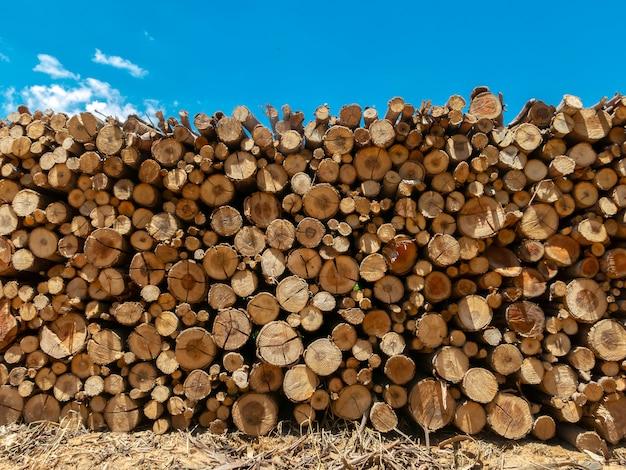 Eukalyptusfeuerholzstamm gestapelt