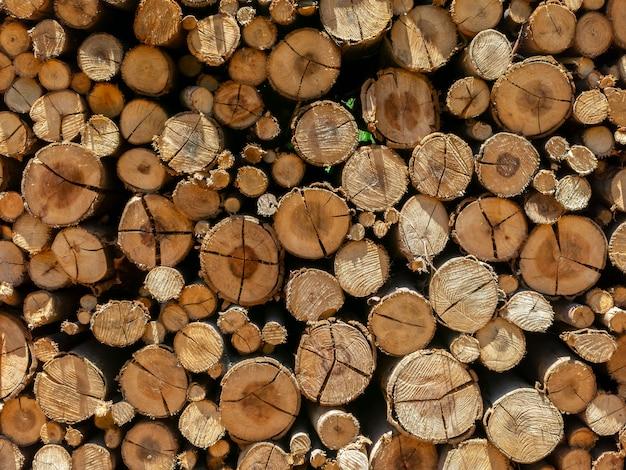 Eukalyptusfeuerholzstamm stapelte texturhintergrund auf