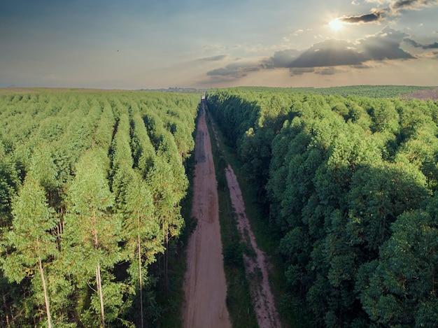 Eukalyptusplantage in brasilien. landwirtschaft aus zellulosepapier. vogelperspektive drohnenansicht. luftaufnahme des eukalyptus-grünwaldes