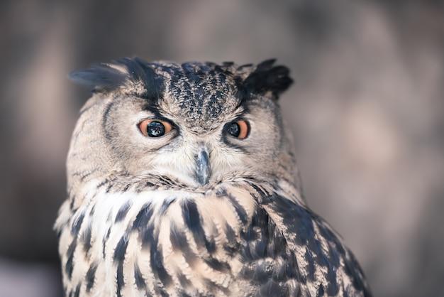 Eulen sind die bekanntesten nachtaktiven vogelarten.