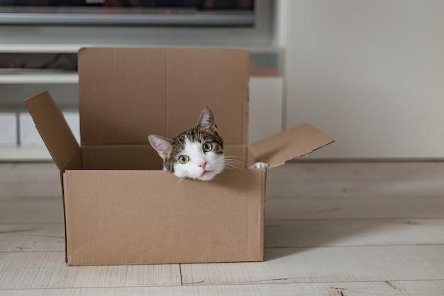 Europäische katze in einer lieferbox