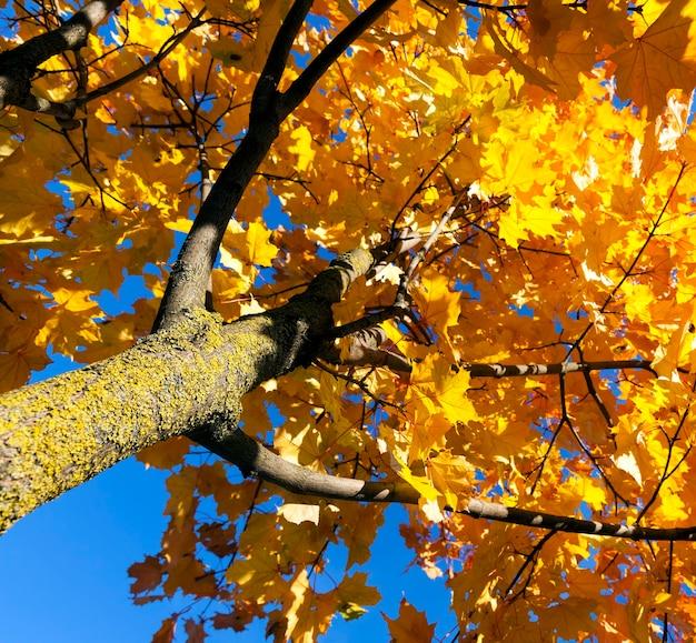 Europäischer herbst in einem stadtpark mit bäumen, die ihre farbe, ihre spezifischen und besonderen jahreszeiten ändern