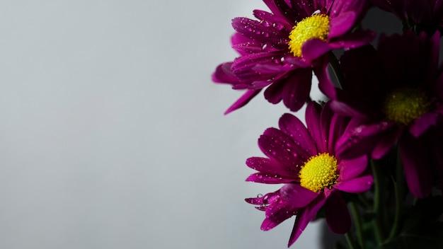 Exemplarplatz mit frühlingsblumen