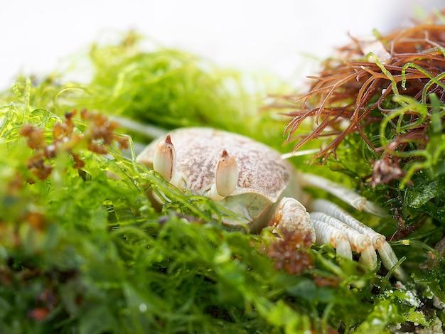 Exotische krabben auf seepflanzen