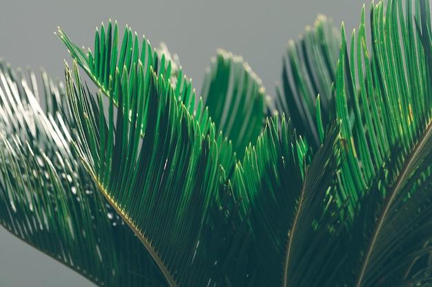 Exotische palme auf einem grauen hintergrund.