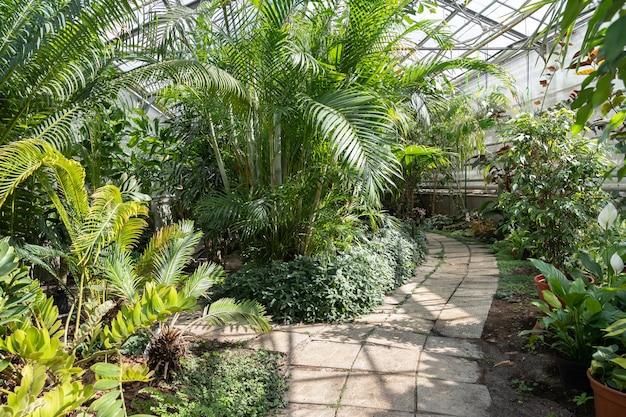 Exotische palmen und bambusbäume im tropischen botanischen garten des gewächshauses orangeriegarten und botanik