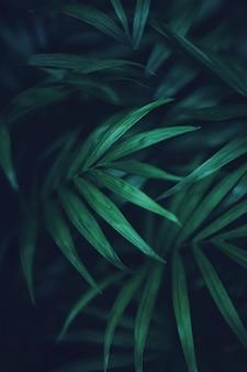 Exotische palmenblätter, grüne naturnahaufnahme