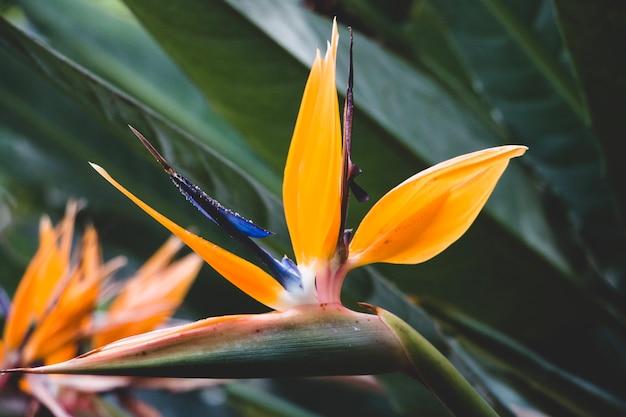 Exotische pflanze im dschungel