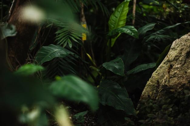 Exotische pflanzen im gewächshaus