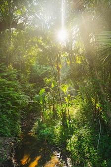 Exotische pflanzen im tropischen wald auf der insel, balinesische wilde natur auf stockfoto