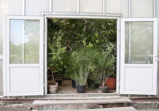Exotische pflanzen und blumen in einem gewächshaus.