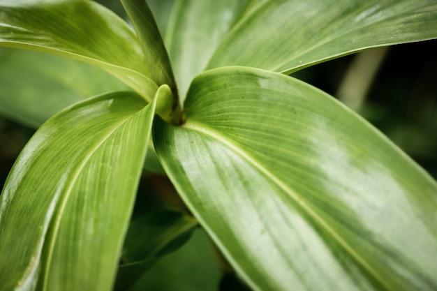Exotische pflanzenahaufnahme