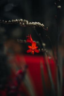 Exotische rote frische blumen wachsen im garten. natürlicher und organischer blumenhintergrund