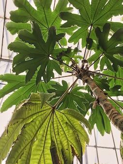 Exotische tropische bäume in einem botanischen garten