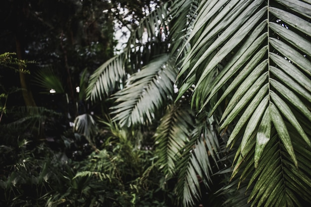 Exotische tropische beschaffenheit der palme