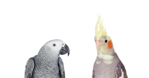 Exotische vögel isoliert auf weißem hintergrund