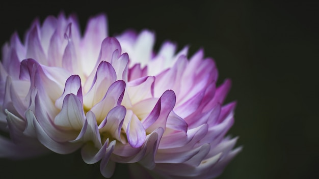 Exotische weiße und lila blüten