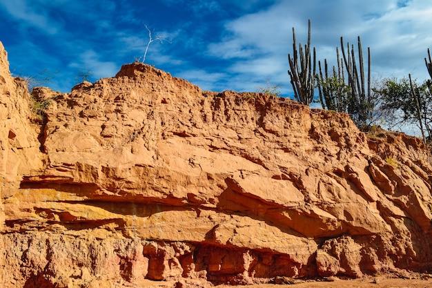 Exotische wildpflanzen auf den sandigen felsen in der tatacoa-wüste, kolumbien