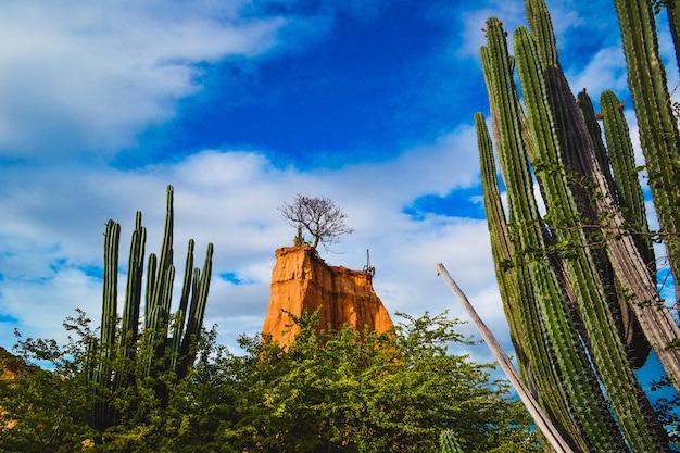 Exotische wildpflanzen und ein felsen unter dem bewölkten himmel in der tatacoa-wüste, kolumbien