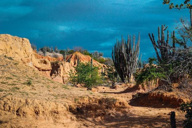 Exotische wildpflanzen wachsen zwischen den sandigen felsen in der tatacoa-wüste, kolumbien