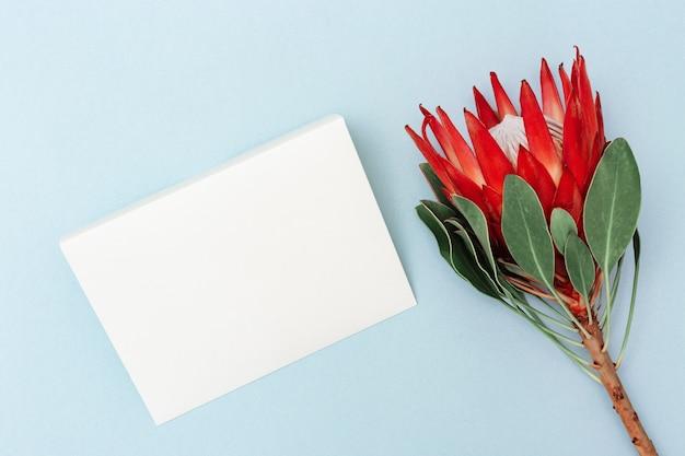 Exotischer großer blumenprotea mit den roten blumenblättern und grün verlässt mit leerem papierbuchstaben auf blauem hintergrund. feiertagskonzept mit natürlicher blume. draufsicht und kopienraum.