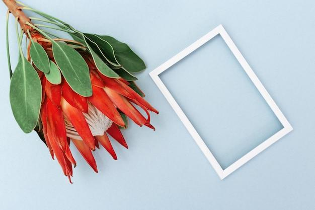 Exotischer großer blumenprotea mit den roten blumenblättern und weißem rahmen auf hintergrund des blauen papiers. feiertagskonzept mit natürlicher blume. draufsicht und kopienraum.