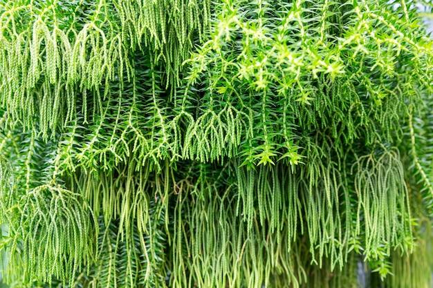 Exotischer pflanzenhintergrund im gewächshaus des botanischen gartens.