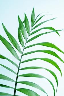Exotischer tropischer konzepthintergrund des minimalen sommers mit kopienraum.