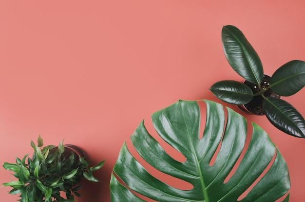 Exotischer tropischer pflanzenrahmen mit monstera und ficus auf rotem hintergrund