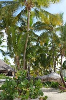 Exotischer tropischer strand mit bungalows zwischen palmen
